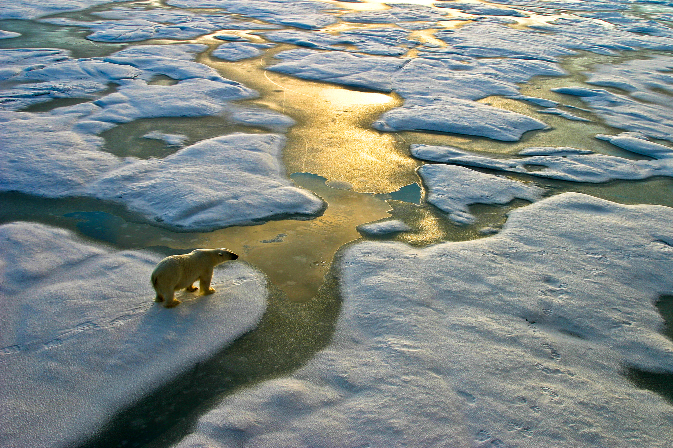 Ours polaire climat